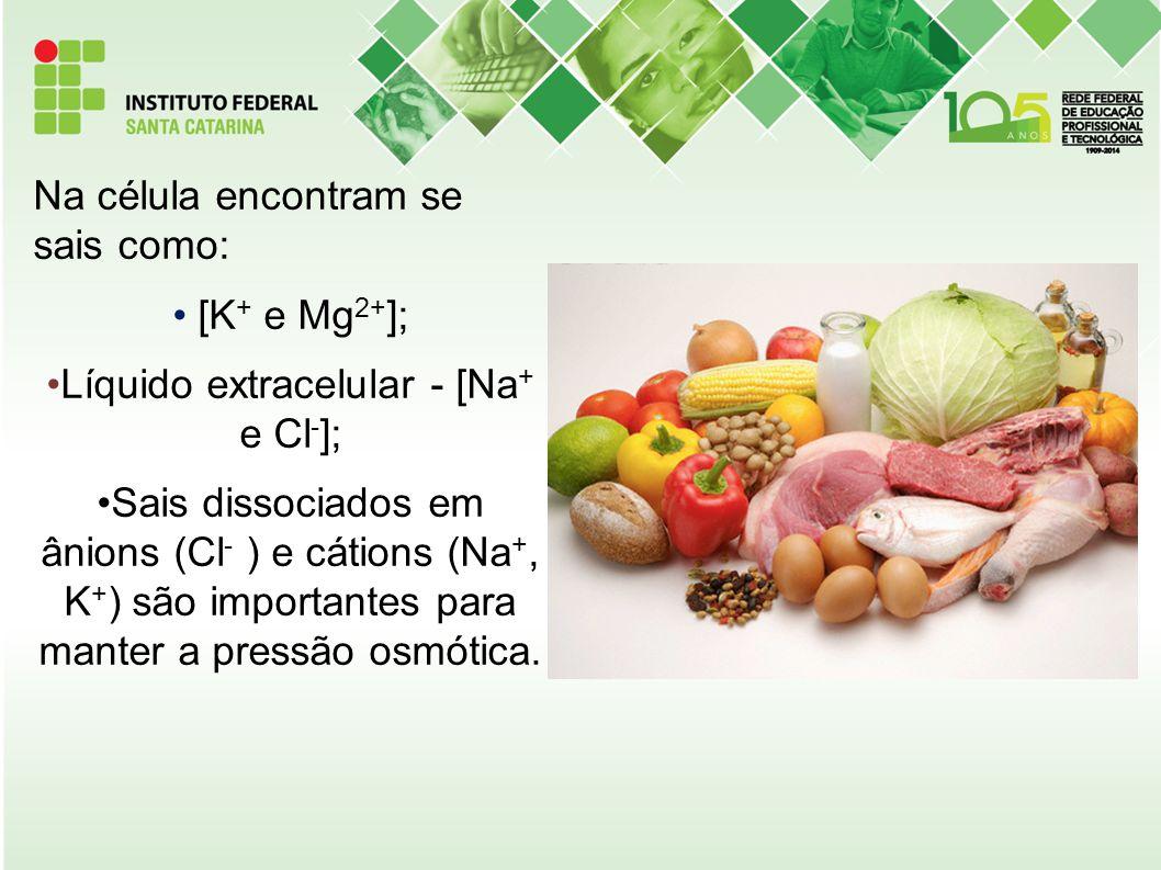 Líquido extracelular - [Na+ e Cl-];